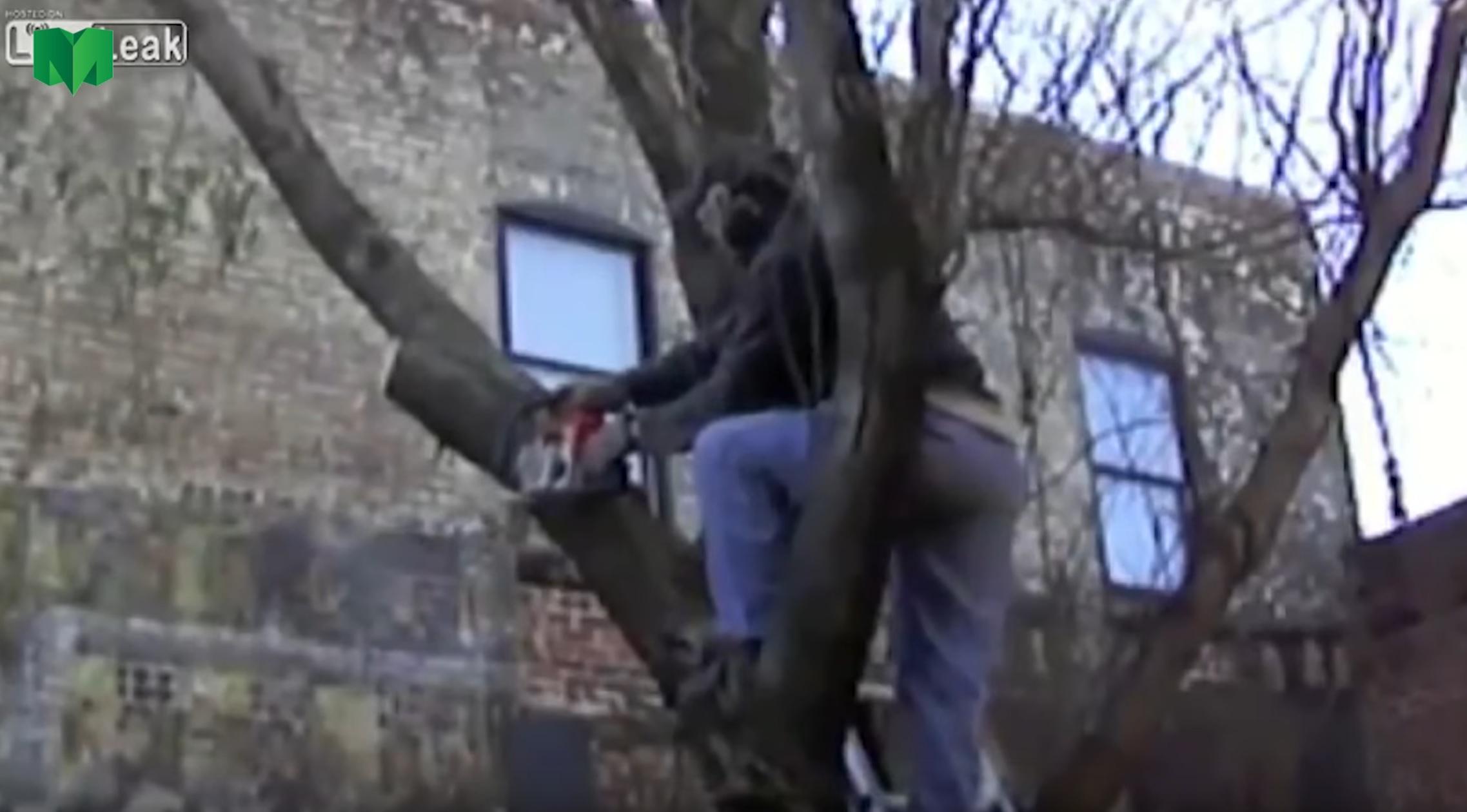 tree cutting fails - Tool Craze
