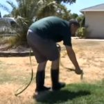 News – Turn Brown Lawns Green by Painting them Green